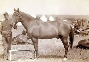 Comanche, 1887, only survivor of Custer's Last Stand.JPG