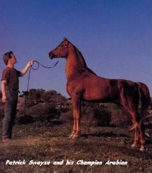 Patrick W Swayze with one of his Arabians /Swayze Photo